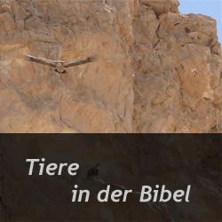 bibel zeit zu leben