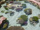 Biblische Orte - Eilat: Coral World